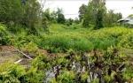 Sungai Pengeringan di Jalan Wengga Buntu Akibat Tertutup Rumput dan Tumbuhan