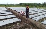 Warga Desa Trinsing Termotivasi jadi Petani Melon