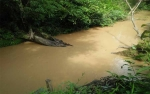 Warga Desa Paku Beto Keluhkan Keruhnya Air Sungai Akibat Aktivitas Tambang Batubara