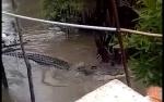 Video Buaya Empat Meter di Sungai Belakang Rumah Gegerkan Warga Kotim, ini Kata BKSDA