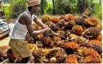 CPO Cuma Berharap dari Apiknya Minyak Nabati Laio