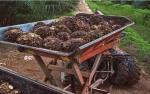India Potensi Naikkan Lagi BM Minyak Nabati