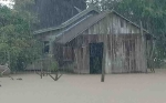 Banjir Kiriman dari Gunung Mas Rendam Belasan Desa di Pulang Pisau