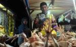 Masyarakat Keluhkan Penaikan Harga Ikan dan Ayam