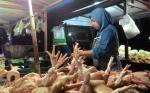 Pedagang Beberkan Dugaan Penyebab Penaikan Harga Ayam Potong