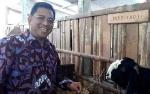 DPRD Usulkan Peternakan Kambing Perah di Kotawaringin Timur