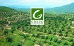 Gozco Plantations Incar Produksi TBS Inti Capai 250.000 Ton