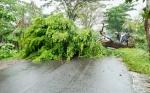 Hujan Disertai Angin Kencang Tumbangkan 2 Pohon Tumbang di Sampit