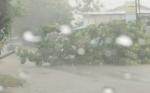 Petugas Disperkim Langsung Bersihkan Pohon Tumbang