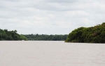 Kabupaten Pulang Pisau Segera Miliki Hutan Adat