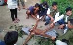 SKW II Pangkalan Bun Evakuasi Anak Orangutan Nyasar di Kebun Sawit