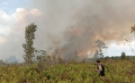 Tim Terpadu Karhutla Berjibaku Padamkan Kebakaran Lahan di Tumbang Nusa