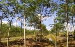 Pulang Pisau Komitmen Dampingi Masyarakat Kembangkan Hutan Rakyat