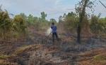 Kebakaran Lahan Terjadi di Kotawaringin Timur