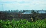 Lahan 10 Hektare Terbakar di Pulang Pisau