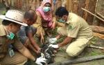 Pemkab Sukamara Beri Vaksin Ayam dan Bebek