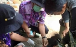 DKPP Sukamara Targetkan Vaksin 1.300 Ekor Ayam dan Bebek