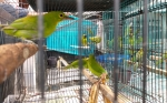 Tersangka Perdagangan Burung Dilindungi Bertambah Jadi 3 Orang