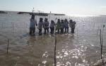 Sukseskan Kegiatan Serantak OASE KK, Bupati Kobar Tanam Mangrove di Pantai Keraya