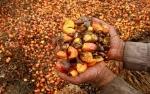 Timteng dan Afrika Buka Potensi Serap CPO 1 Juta Ton