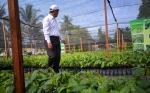 Perkebunan Kalteng Harus Penuhi Skala Industri