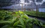Petani Harus Memiliki Saham di Industri Pertanian