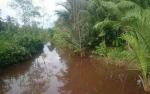 Buaya Sering Terlihat di Sungai Desa Handil Sohor