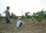 77 % Masyarakat Desa Pulau Nibung Bekerja Sebagai Petani