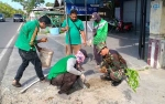 Petugas Dinas PUPR-PKP Kapuas Tanam Pohon Hijaukan Kota Kuala Kapuas