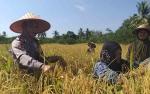 Kapolsek Kapuas Hilir Sosialisasi Cegah Karhutla kepada Petani di Sei Asam