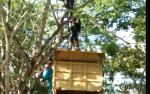 Remaja Ini Nekat Naik Pohon Setinggi 7 Meter, Dikira Ingin Bunuh Diri tak Tahunya...