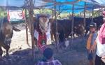 Pasar Hewan Kurban Diharap Berkelanjutan
