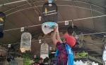 Kontes Burung Berkicau Bupati Cup I Ajang Pembuktian