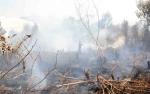 Lahan di Adonis Samad sudah 10 Kali Terbakar