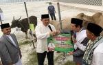 Gubernur Kalimantan Tengah Sumbang 100 Sapi Kurban