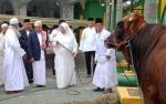 Bupati Kotawaringin Barat Serahkan Sapi Kurban di Masjid Jami Nurul Huda