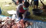 Petugas Dinas Peternakan Temukan Cacing Hati dan Paru-Paru Bernanah pada Hewan Kurban