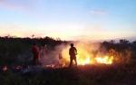 DLH Sukamara Data 62 Titik Api Terpantau hingga Agustus