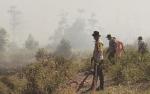 Selama Agustus 273 Ribu Hektare Lahan Terbakar di Sukamara
