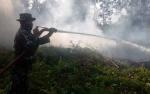 Tim Gabungan Padamkan 2 Hektare Lahan Terbakar di Desa Panarung