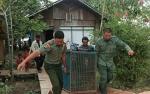 Orangutan dari Warga akan Direhabilitasi Selama 10 Tahun
