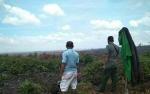 Sempat Tertangkap Warga, Orangutan di Desa Bagendang Hilir KembaliLepas