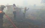 Sudah 200 Hektare Lahan di Kotawaringin Timur Terbakar