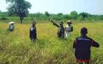 Dandim 1011/Klk Bersyukur Kelompok Tani Binaan di Desa Sidomulyo Panen Raya