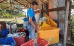 Ikan Hasil Tangkap dari Pantai Lunci Banyak Dikirim ke Pontianak