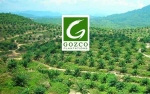 Gozco Plantations Siap Dongkrak Penjualan Capai Rp700 Miliar
