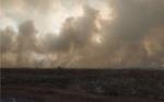 Ratusan Hektare Area Taman Nasional Tanjung Puting Terbakar