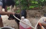 Hanya Anjing dan Kucing Jantan Bisa Ikut Program Steril Gratis di Palangka Raya