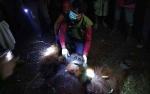 BKSDA Kalimantan Tengah Selamatkan Orangutan Seberat 90 Kilogram di Kotawaringin Timur