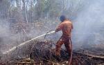 Petugas Damkar dan BPBD Kotawaringin Barat Harus Bolak-Balik ke Sejumlah Tempat Padamkan Karhutla